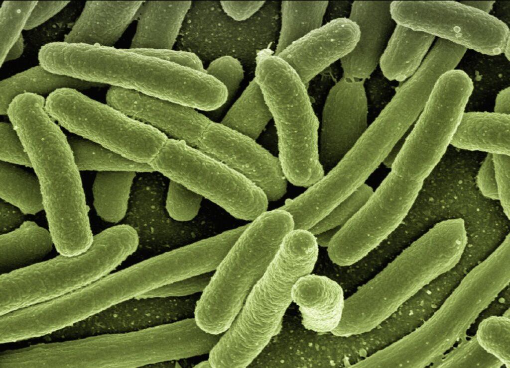 CBD and Gram-negative bacteria