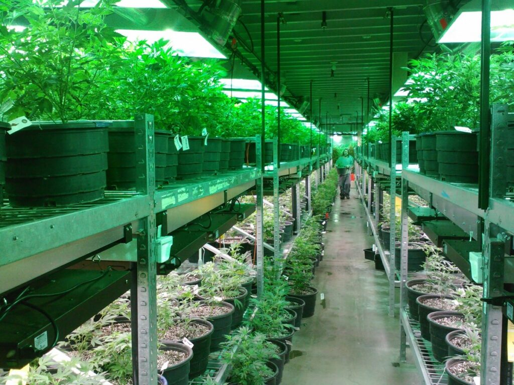 Legal Guide to the Business of Marijuana
