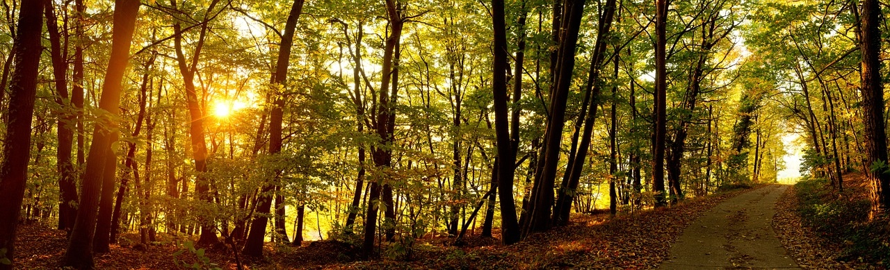 sunrise, forest, forest path